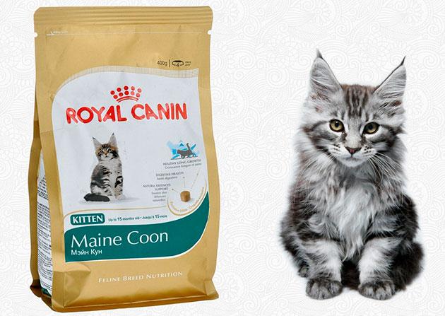 Если вы кормите котенка мей-куна готовыми кормами - убедитесь в их качестве