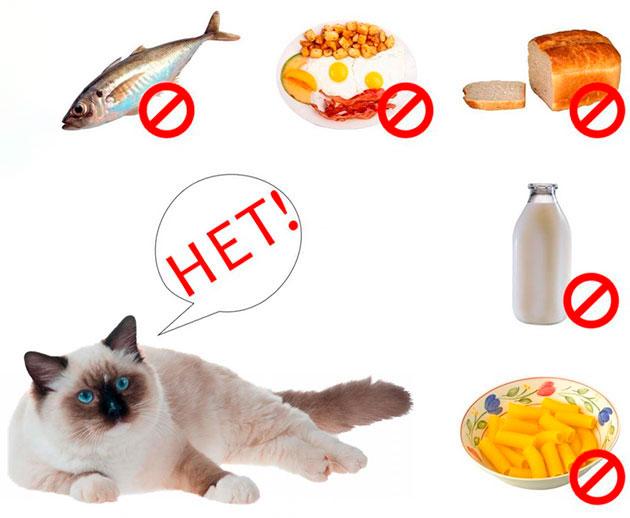 Существует ряд продуктов, которые запрещены регдоллам, не пренебрегайте этим списком