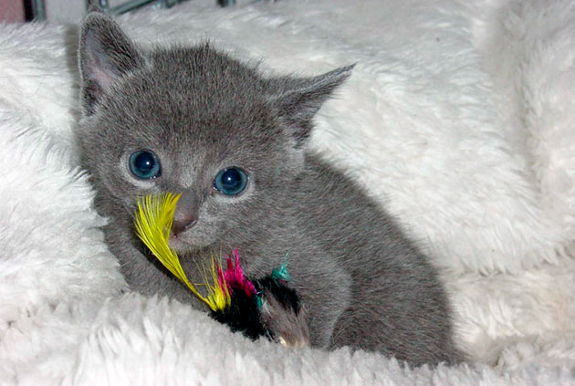 Ни в коем случае не кричите на котенка, если он сходит мимо лотка