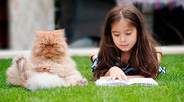 Персидские кошки очень миролюбивы и с легкостью находят общий язык с детьми