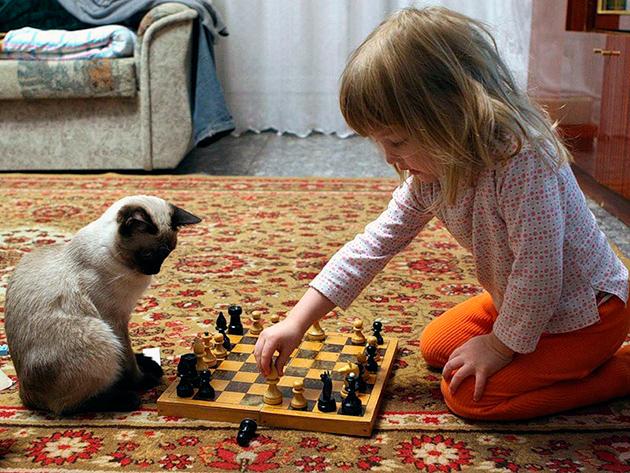 Сиамские кошки достаточно ревнивы и поэтому к детям младшего возраста
